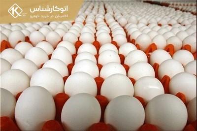 قیمت تخممرغ تعیینتکلیف میشود